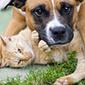 Companion Animals | Animal Rights SMS | Scoop.it