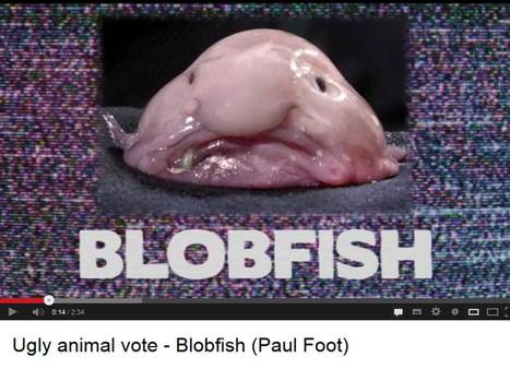 UK National Science + Engineering Competition - Ugly Animal vote   Plant Biology Teaching Resources (Higher Education)   Scoop.it