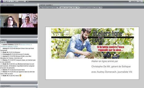 Le replay de l'atelier en ligne de Viti sur la lutte contre l'esca est disponible. | Verres de Contact | Scoop.it