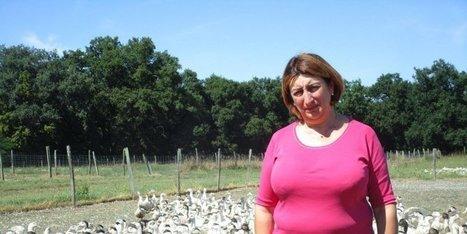 Les éleveurs de canards redémarrent, affaiblis | Agriculture en Dordogne | Scoop.it