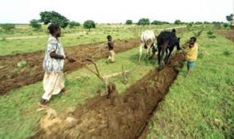 Mali : Les paysans luttent pour la sécurité alimentaire | Questions de développement ... | Scoop.it