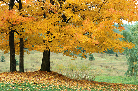 Illinois Fall Foliage: A MapQuest Guide | The Miracle of Fall | Scoop.it
