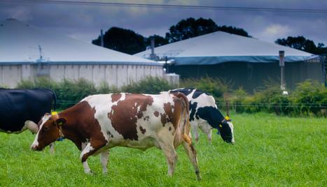 Dairy farm steps up banker education programme - Farming UK news | Dairy Farming | Scoop.it