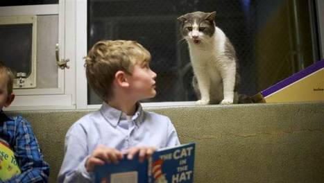 Purrs, not frowns: Kids feel comfortable reading aloud to shelter cats - TODAY.com | Good Advice | Scoop.it