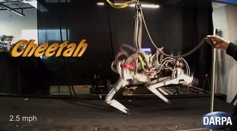 DARPA's Cheetah Robot Sets New Robot Speed Record ... | The Robot Times | Scoop.it