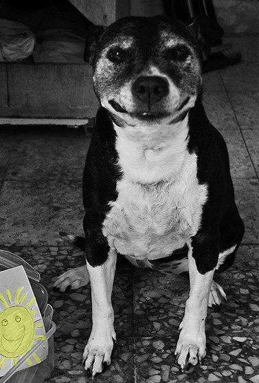 Israel Dog Grooming from Maale Adumim - Poochie Moochie - מספרת כלבים ישראל ומעלה אדומים | News From Jerusalem | Scoop.it