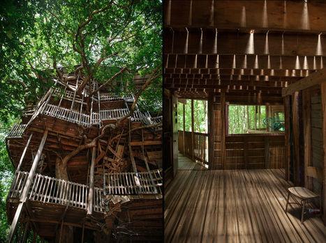 Une sacrée cabane dans un arbre ! | Just Do It Yourself | Scoop.it