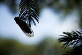 Cicada Spawn Tracked by Scientists Armed With Technology - Bloomberg | GMOs & FOOD, WATER & SOIL MATTERS | Scoop.it