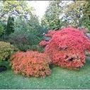 Botanic garden for Island - Manx Radio | Japanese Gardens | Scoop.it