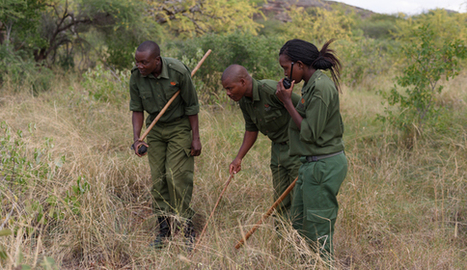 Women hired to stop poaching in Kenya | Eco-feminism & the Ecology of Fear | Scoop.it