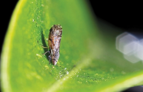 Un insecte pillard | Mes passions natures | Scoop.it
