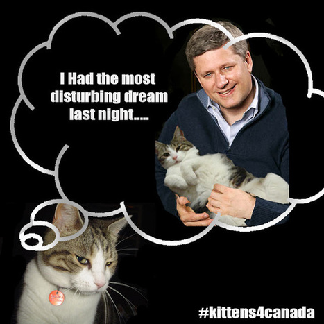 Kittens4Canada | Elections Canada 2015 | Scoop.it