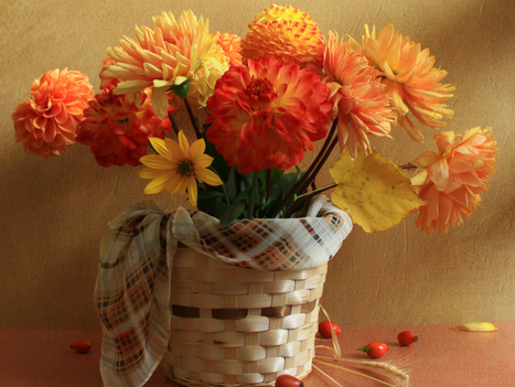 Make You Friends and Family Feel Special on Special Occasions   Flowers in the Valley   Scoop.it