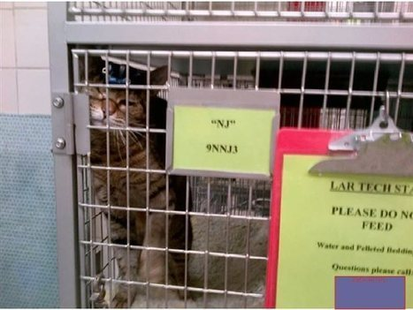 Cats in Laboratories | research project | Scoop.it