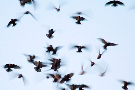 Crowdsourcing, for the Birds | Open Government Daily | Scoop.it