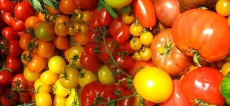 Slice of PLOS: 57 Varieties of Tomato | PLOS Biologue | Emerging Research in Plant Cell Biology | Scoop.it