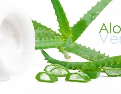 Is Aloe Vera Really Such a Powerful Plant? | eCellulitis | Intersting & Useful | Scoop.it