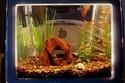 11 Awesome iMac Aquariums | Aquaculture | Scoop.it