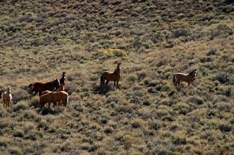 Horse Psychology 101 | DanyelleD 3 | Scoop.it