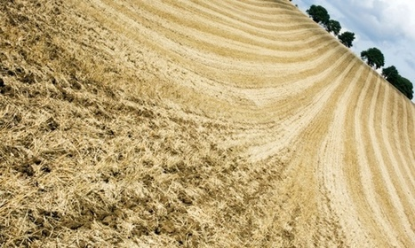 UK will need to import over half of its food within a generation, farmers warn | sustainablity | Scoop.it