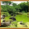 A Love of Japanese Gardens