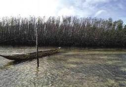 Mangroves of E. Visayas need protection | Environment | Scoop.it