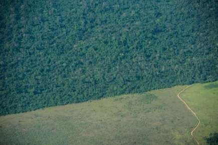 Amazon deforestation leaps 16 percent in 2015 | Cultural Worldviews | Scoop.it