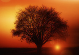 Heartfelt Stories: The Trouble Tree   Romantic, Touching and Inspirational Stories   Scoop.it