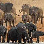 Paul G. Allen Family Foundation Awards $7 Million for Elephant Survey | News | PND | family philanthropy | Scoop.it