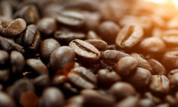 Why Shade Grown Coffee Is Better | EcoWatch | Scoop.it