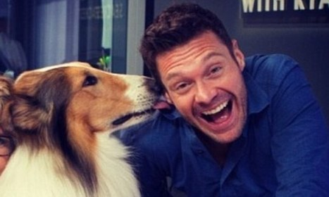 Lassie prepares to make a comeback... with the help of Ryan Seacrest | Kickin' Kickers | Scoop.it