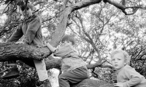 England's forests: the joy of climbing trees | Children | Scoop.it