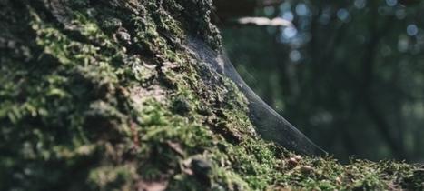 Les forêts / France Inter | Géographie : les dernières nouvelles de la toile. | Scoop.it