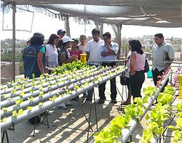 Impulsan cultivos hidropónicos para ahorrar agua y crear microempresas en Huanchaco, Perú | Vertical Farm - Food Factory | Scoop.it