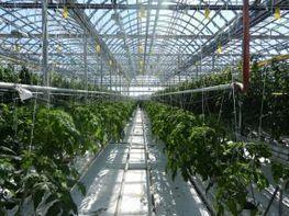 Une distinction pour les fermes Lufa | Agriculture Urbaine et gouvernance alimentaire | Scoop.it