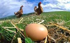 15 links muy útiles para la vida autosuficiente en el campo | Alimentación y vida natural | Scoop.it