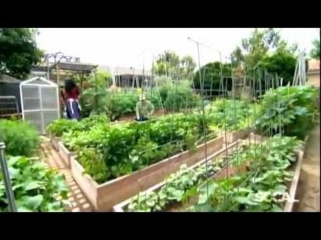 Intensive Urban Gardening   Permaculture for a better world   Scoop.it