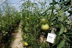 Dans la Drôme, une fabrique géante d'insectes utiles | Développement durable | Scoop.it