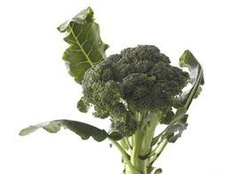 10 Creative, Kid-Friendly Broccoli Recipes | Food & Recipes | Scoop.it