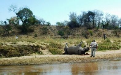 Vietnamese NGO condemns rhino poaching - Eyewitness News | Kruger & African Wildlife | Scoop.it