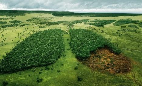 En 2050 se habrá talado un área de bosque tropical del tamaño de la India - Zero 97.7 | Agua | Scoop.it