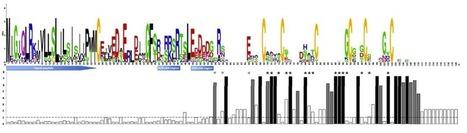 MPMI: A comprehensive analysis of genes encoding small secreted proteins identifies candidate effectors in Melampsora larici-populina (poplar leaf rust) | Plant Genomics | Scoop.it
