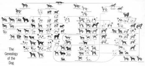 Genealogy-of-the-dog-low-res.jpg (1584x723 pixels) | Cinófilia | Scoop.it