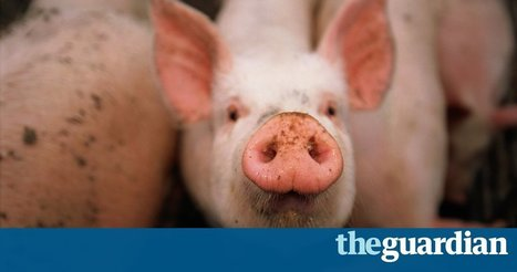 Antibiotic-free meat to hit the shelves | @FoodMeditations Time | Scoop.it