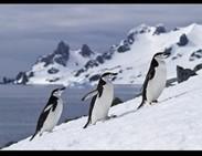 10 datos sobre la Antártida | Curiosidades | Scoop.it