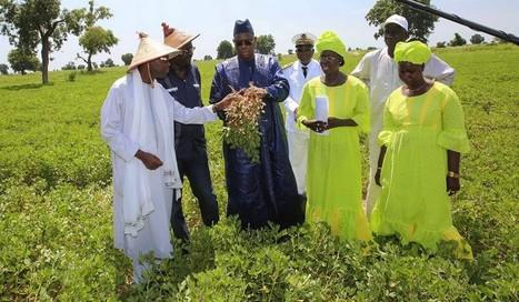 Sénégal : le Président souhaite transformer les paysans en agriculteurs | Questions de développement ... | Scoop.it