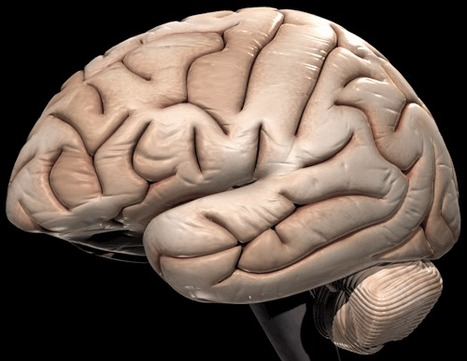 Our Plastic Brain | Psychology and Brain News | Scoop.it