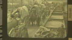 """""""Chienne de guerre"""" ou quand les animaux tombaient sur les ... - France 3   Centenaire de la première guerre mondiale   Scoop.it"""