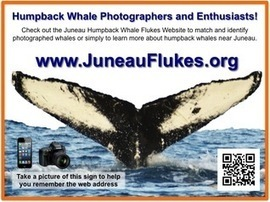 Juneau Humpback Whale Flukes | MESAS - Marine Ecosystem Sustainability in the Arctic and Subarctic | Scoop.it