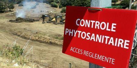 Un premier cas de bactérie Xylella fastidiosa dans les Alpes-Maritimes | EntomoNews | Scoop.it